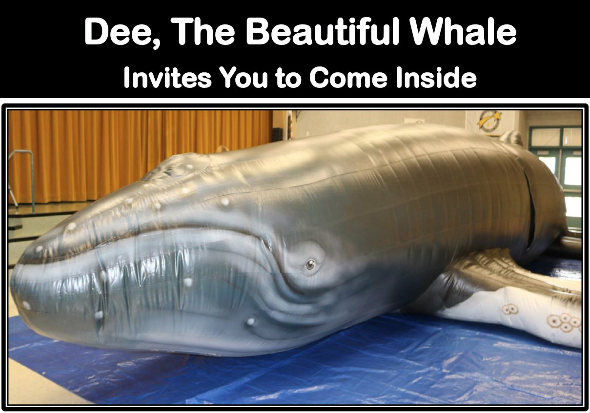NEW Dee, The Beautiful Humpback Whale Ambassador | Save The Whales